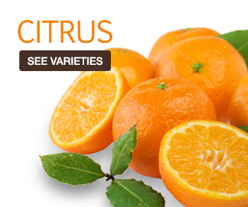 citrus-catgeory
